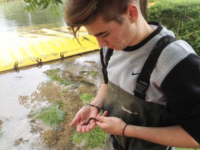 Pesca eléctrica para trasladar fauna acuática al lugar de trabajo durante el trabajo.